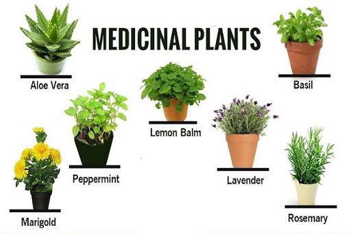 Important plant lists